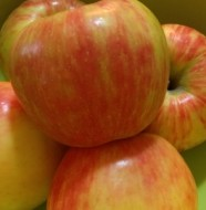 Honeycrisp apples in bowl